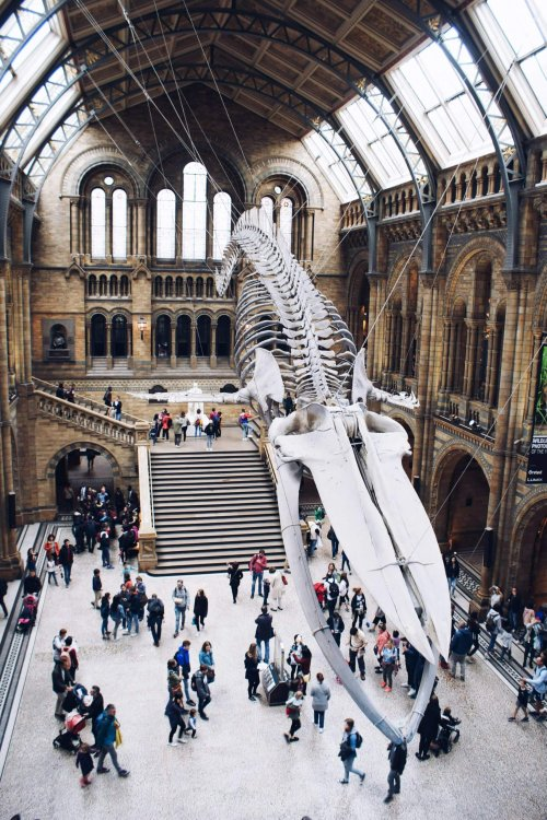natural-history-museum-of-london
